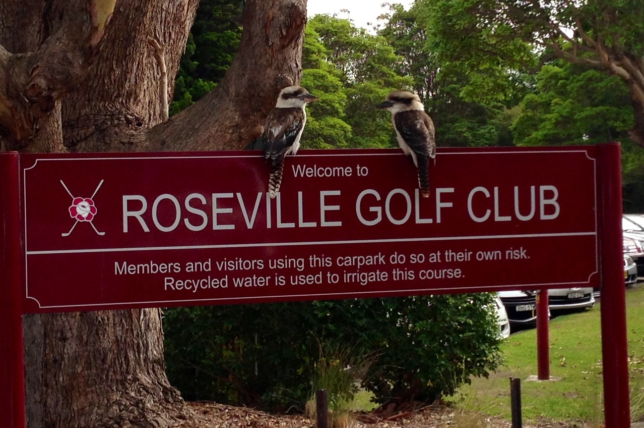 Kokaburra Roseville Sign